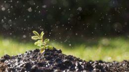peligros fertilizante